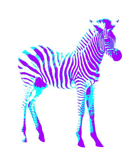 Zebras: Built to Last